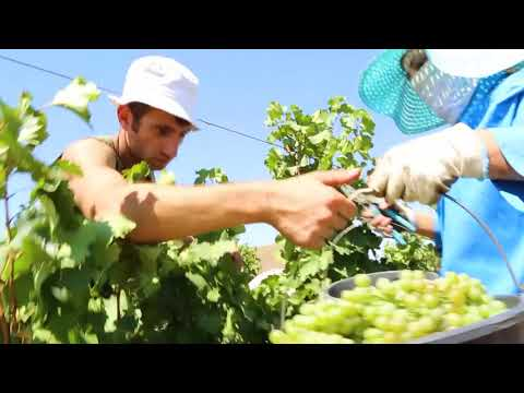 Reinventing an Ancient Tradition: Armenia's Wines | Nairy Chaglasyan | Innovate Armenia | USC