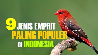 Download lagu 9 JENIS EMPRIT PALING POPULER DI INDONESIA