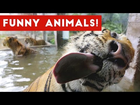 Funniest Pet & Animal Bloopers & Reactions Compilation October 2016 | Funny Pet Videos