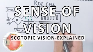 Sense Of Vision | Scotopic Vision Detailed | Photoreceptor Cells