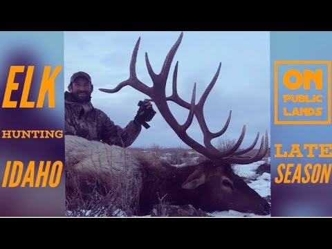 Elk Hunting Idaho (late Season) Tactics And Gear