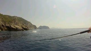 100kg Yellow fin tuna steals dorado mahi mahi..
