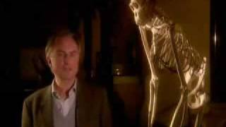 Richard Dawkins explains the meaning of life