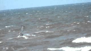 Виндсерфинг на волнах