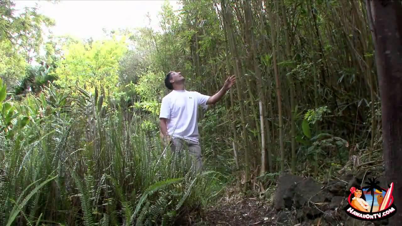 Kula Botanical Garden   Maui Tropical Flowers   YouTube