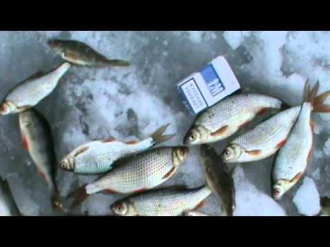 рыбалка на шершнях просмотр темы