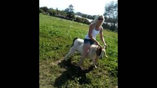 Goat riding haha