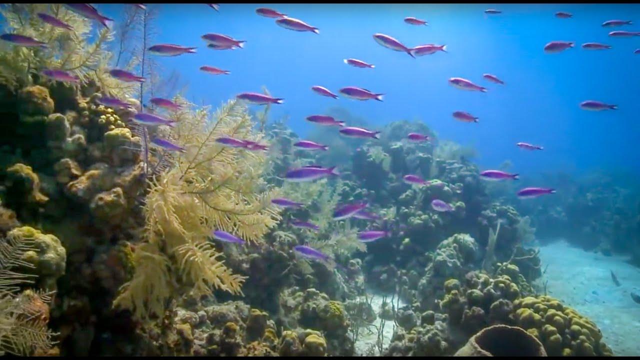 coral reefs and algae के लिए चित्र परिणाम