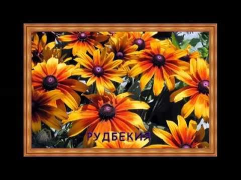 Цветник на солнце.Солнцелюбивые цветы.