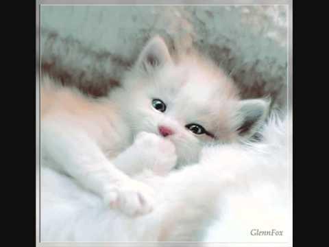 ✯✯✯BuonaNotte e dolci sogni ✯✯✯