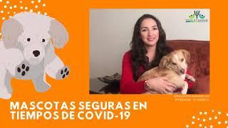 Mascotas seguras COVID-19