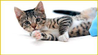 Cats jumping fails l Funniest Video 2021l Funny Cats Compilation