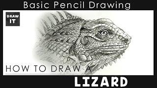 lizard realistic draw drawing simple step
