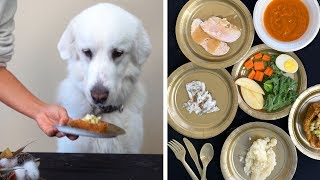 SIX COURSE THANKSGIVING MEAL FOR DOGS!