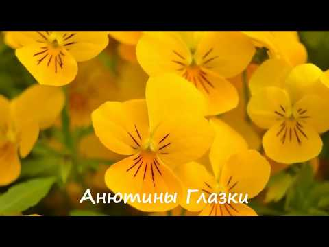 Вопрос: Какие оранжевые и жёлтые цветы растут в средней полосе России?