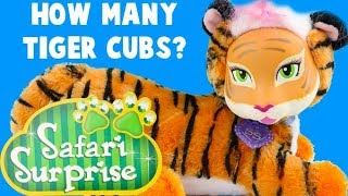 Safari Surprise Amber! How Many Tiger Cubs Will Mama Amber Have? Pikmi Pop Opening