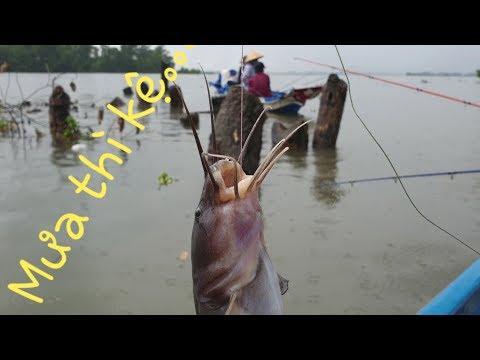 Khi cần thủ sau lái trả thù. Thả mồi trúng ngay bầy cá, cá lên như mưa | Săn bắt SÓC TRĂNG |