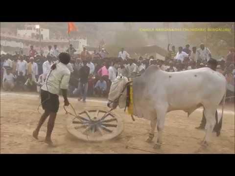 2017 Yaganti Bulls Show - Special Show By Narsappa, Devabetta(V), Yemmiganoor (M), Kurnool Dist