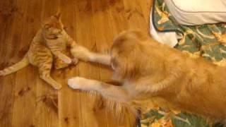 五郎が御預かり猫の寅ちゃんを誘って遊びました。