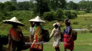 Women wear conical straw hats at Assam tea garden