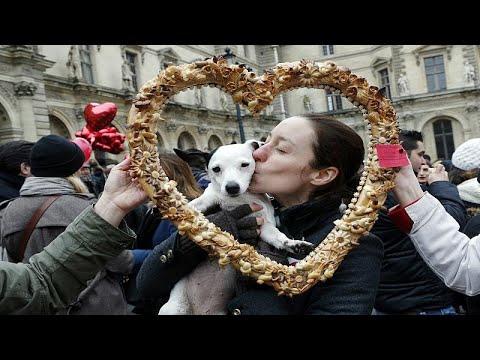 دراسة:  الكلاب قادرة على تبادل مشاعر الحب  - نشر قبل 7 ساعة