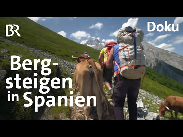 Einzigartiges Gebirge in Spanien: Bergsteigen in den Picos de Europa  | Bergauf-Bergab | Doku | BR