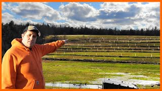 A Duck Farmer's Permaculture Orchard