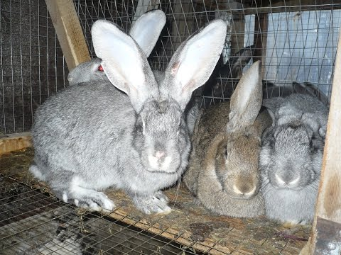 Разведение кроликов видео -