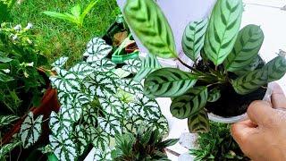 10 Pares de Plantas Ornamentais que você Também pode Cultivar no seu Jardim