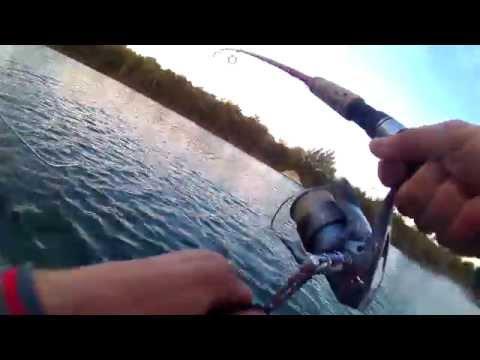 ловля на депс балисонг видео