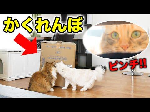 かくれんぼに付き合ってくれる猫