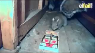 Cute squirrel (jump scare)