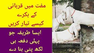How to invest for qurbani. قربانی کے جانور مفت میں تیار کرنے کا طریقہ