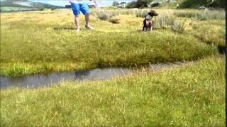 Border Collie X Springer Spaniel Goes On A Huge Hike