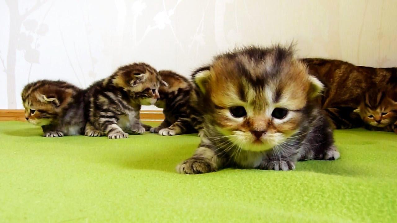 can i give my cat melatonin