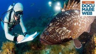 Documentario Jacques Cousteau - Il pesce che divorò Giona - La grande avventura del mare