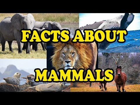Amazing Facts about Mammals - Science With Kids