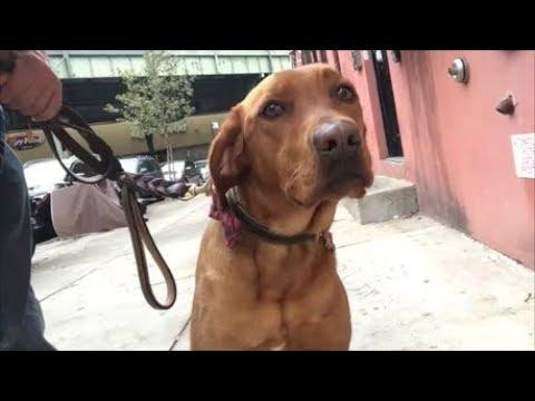 Orange Dog talks about someone with bad hair and orange skin