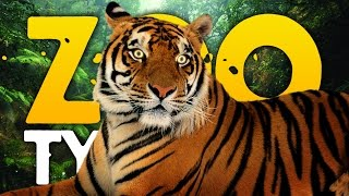 OUR FIRST ZOO | Zoo Tycoon (Part 1)