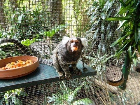 Alma Park Zoo - March 2nd 2014 - Closing Down - Brisbane, Australia