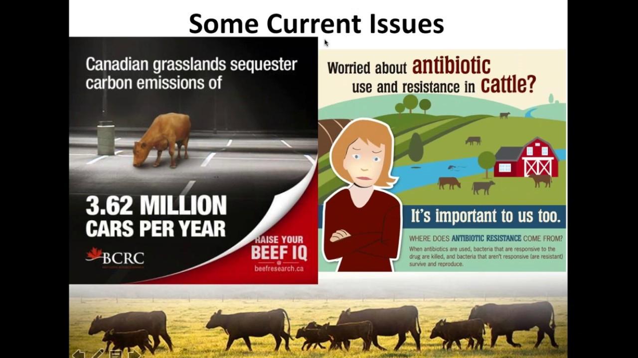 Explaining Growth Promotants Used in Feedlot Cattle
