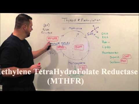 Thyroid & MTHFR