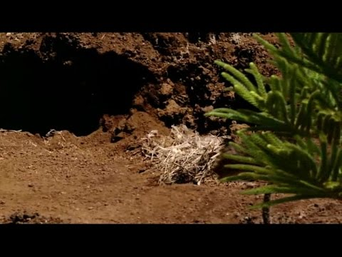 Walking With Dinosaurs Ep1 New Blood
