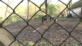 KTV híradó (kutyák rossz tartásáról) Thumbnail