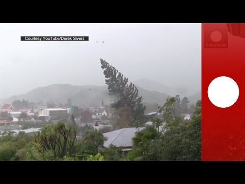 Huge Tree Gets Uprooted By Crazy Storm
