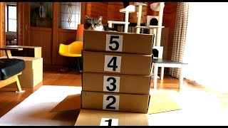 跳び箱とねこ 。-Vaulting box and Maru.-