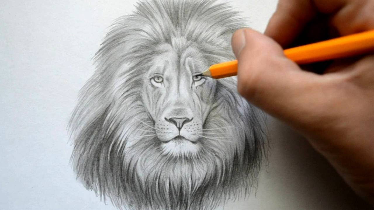 Time Lapse Drawing of a Lion - YouTube