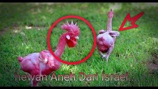 Hewan Aneh Muncul Di Israel Pertanda Apakah Ini