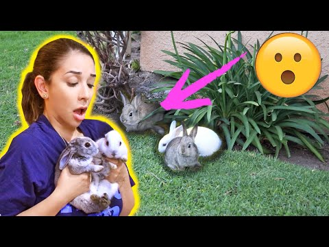 rescuing-baby-bunnies-stuck-under-a-house!-😱😭