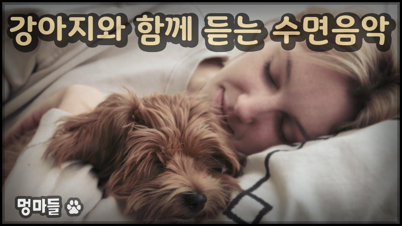 강아지와 함께 듣는 수면음악 #멍마들, 강아지 외출시 음악 - Sleep music with your dog